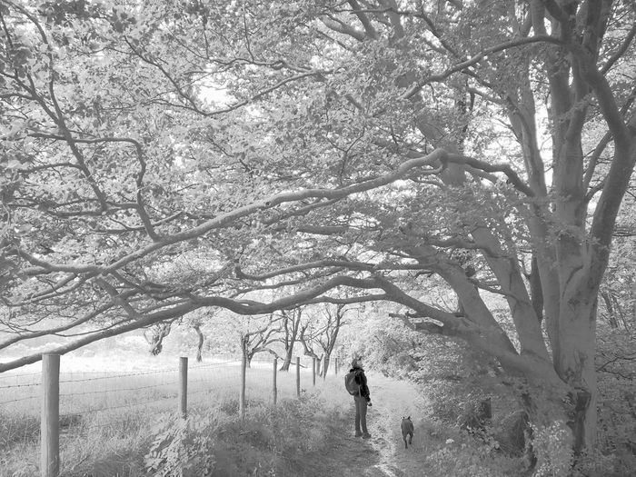 Rear view of man standing amidst trees