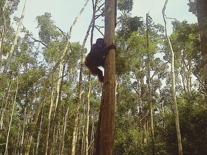 Saveorangutans be nature Savetheworld