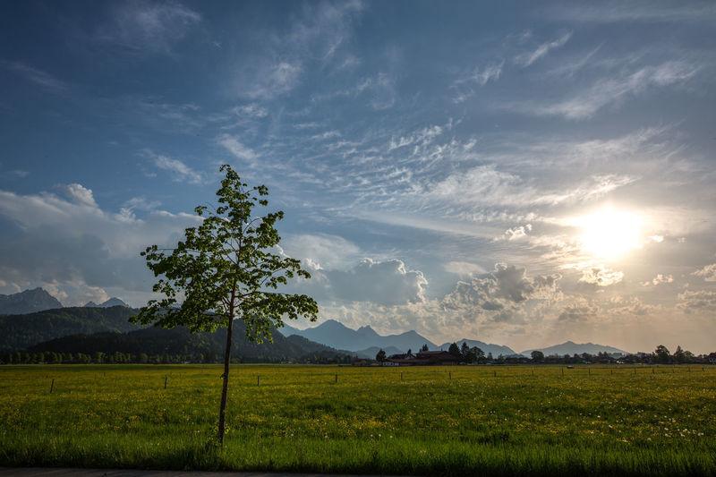 Allgäu Alm Alpen Beauty In Nature Field Landscape Nature No People Outdoors Sky Sunset Tranquil Scene Tree EyeEmNewHere