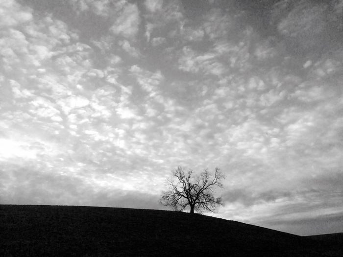 Lone Tranquility Sky Landscape Isolated Majestic Tranquil Scene Horizon Over Land Tree Nature Bare Tree Beauty In Nature Day Outdoors Scenics No People Blackandwhite Black And White Depression