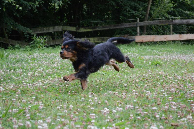 A Running Dog