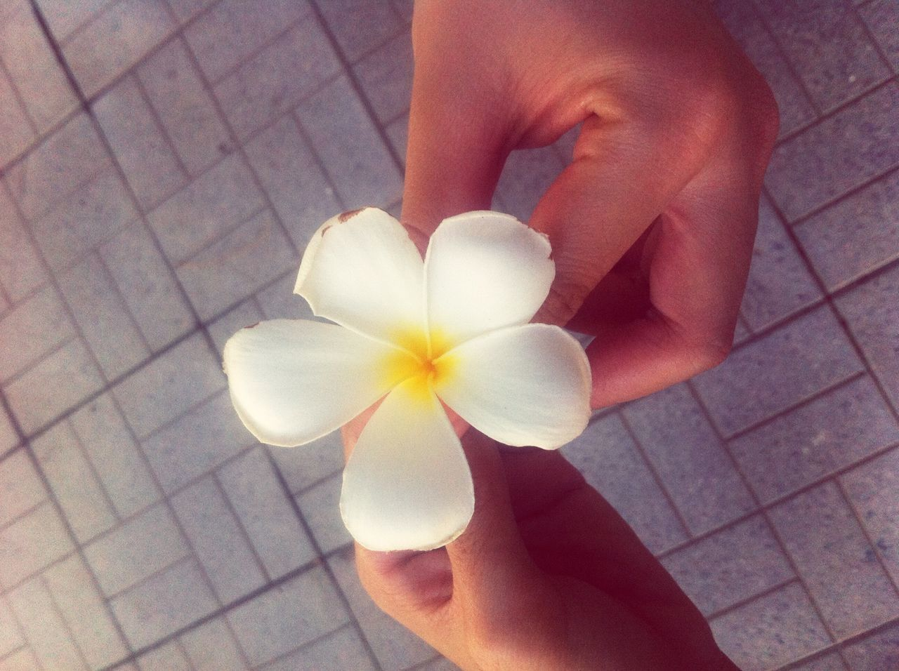 HIGH ANGLE VIEW OF HAND HOLDING WHITE FLOWER