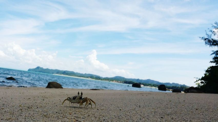 Crab Sand Sea Cloud - Sky Blue Heading To The Sea Beauty In Nature Stone Sea View Moving Forwards Freshness Beauty In Nature Freedom Langkawi Nature Is The Greatest Artist