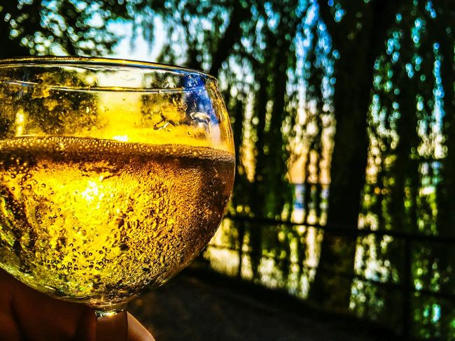 Champagne Champagne Glasses Champagne Lover Glass Gold Golden Wine Trees Nature_collection Champagne Club