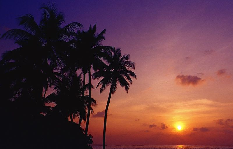 Maldives Sunset Palm Trees Landscape Travel Lifestyle Beach Colors