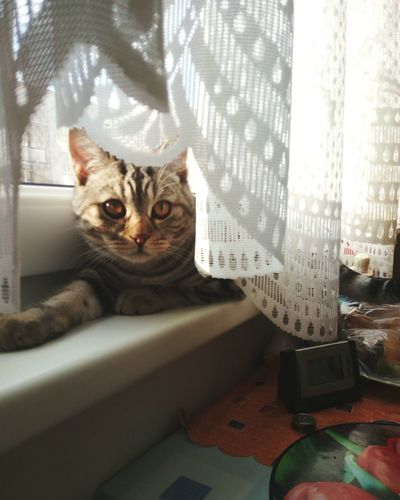 Mycat Cat Domestic Cat Pets Domestic Animals Looking At Camera Portrait Feline One Animal Animal Themes Tabby Cat Radiator No People Close-up Mammal Indoors  Day