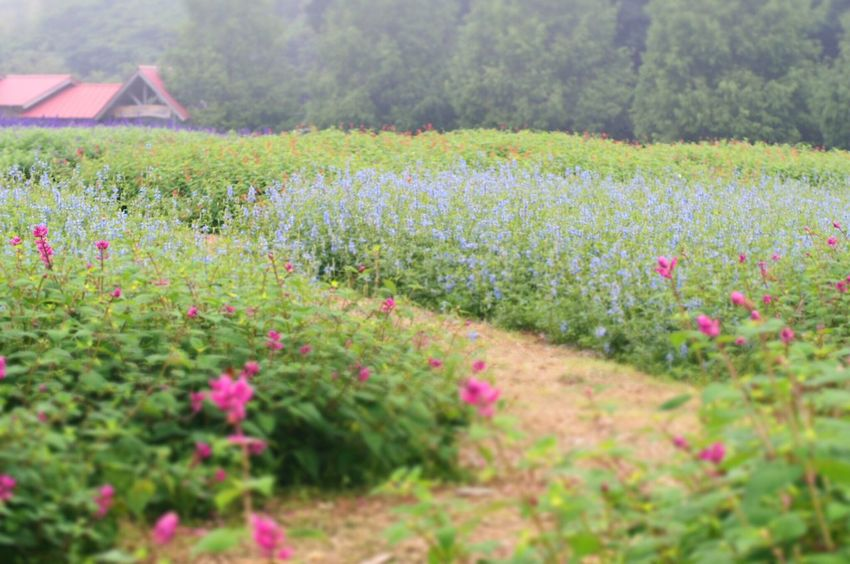 ハーブガーデン。久しぶりのジオラマ! Flower Beauty In Nature Nature EyeEm Nature Lover Garden Green Nature Green Color Relaxing Herbs