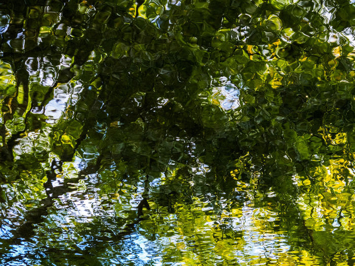 Trees reflected in a lake in Cornwall Abstract Backgrounds Beauty In Nature Green Color Lake Nature Reflection Tranquility Tree Water