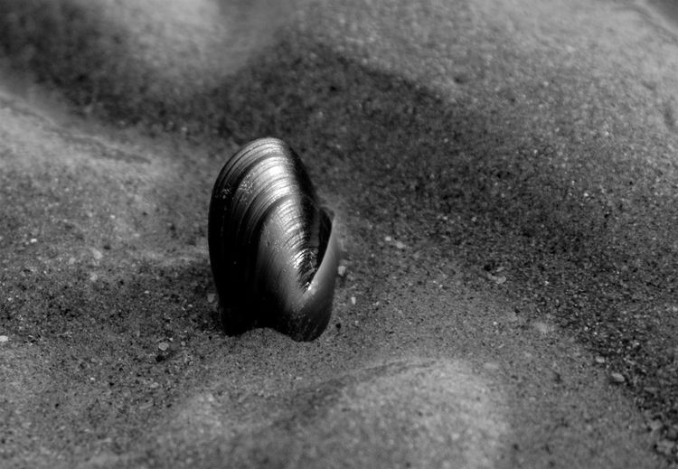 Close-up of clam shell at sandy beach