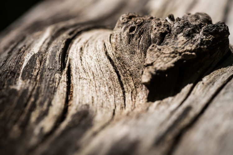 Close-up of wooden planks on tree trunk