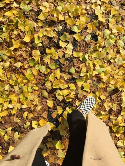 Checkerboard fall Yellow Ginkgo Autumn Fall Low Section Human Leg Human Body Part Body Part One Person Real People Personal Perspective Shoe Nature Sunlight