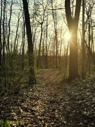 Forest Outdoors Beauty In Nature No People Sunset Michigan, USA Hikingadventures Nature