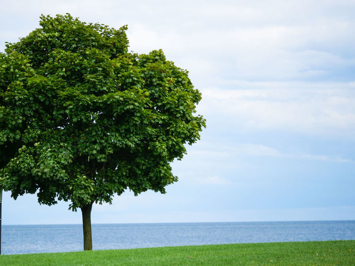 Tree Water Tree Area Sea Beach Horizon Blue Summer Lush Foliage Single Tree Deciduous Tree Treetop Natural Parkland Cumulus Cloud Tree Canopy  Branch Oak Tree