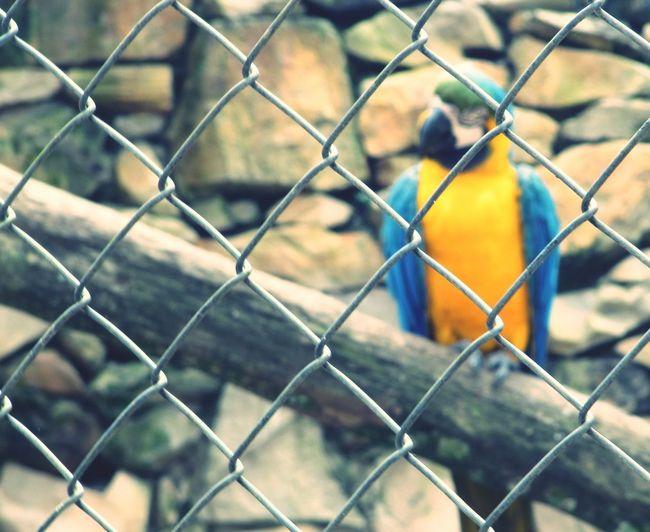 Adapted To The City Focus On Foreground Animal Themes Jailbird Jail Arara Azul E Amarela Arara Triste blue arara
