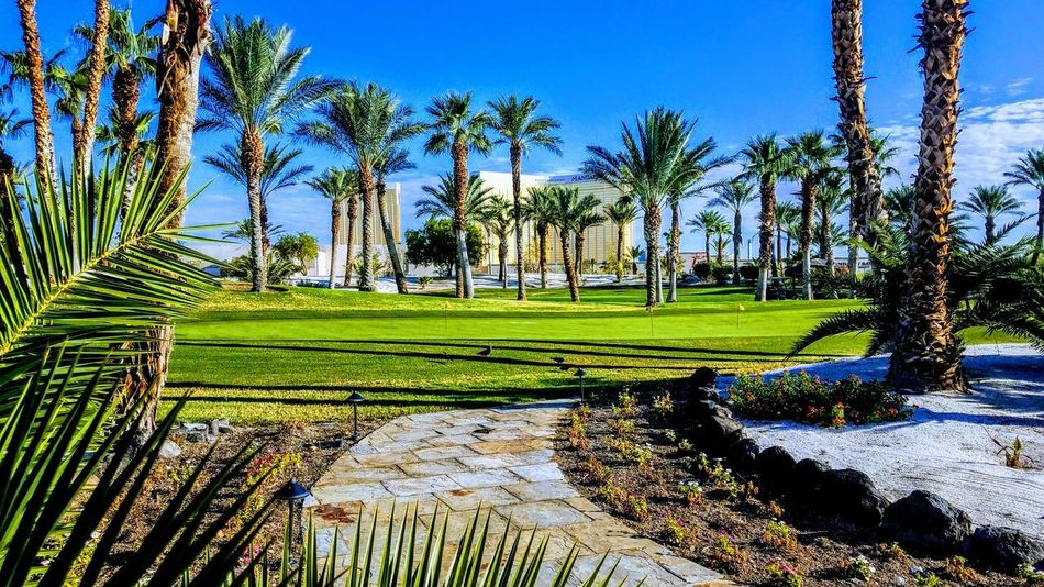 Beauty In Nature Clear Sky Coconut Palm Tree Day Golf Golf Course Grass Green - Golf Course Green Color Luxury Nature No People Outdoors Palm Tree Plant Scenics - Nature Sky Sport Tranquil Scene Tranquility Tree Tropical Climate Water