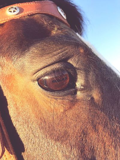 Horse Photography  Horse Eye Horse Animal Themes Animal Close-up Eye Animal Body Part Vertebrate One Animal Mammal Animal Eye No People Day Outdoors Domestic Animals Pets Animal Head