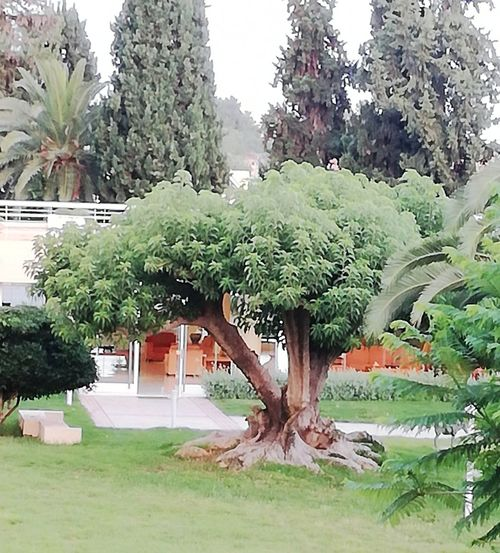 African Tree Tree Architecture Building Exterior Built Structure Plant