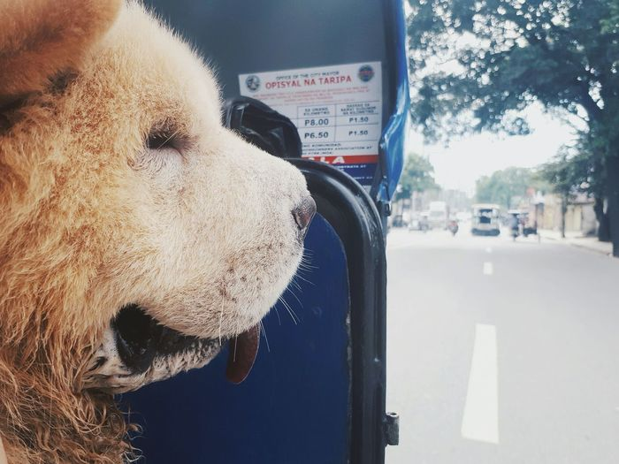 Adventure is out there in the middle of nowhere. Dog One Animal Day Mammal Close-up Domestic Animals Transportation Animal Themes Pets Outdoors No People First Eyeem Photo The Great Outdoors - 2017 EyeEm Awards