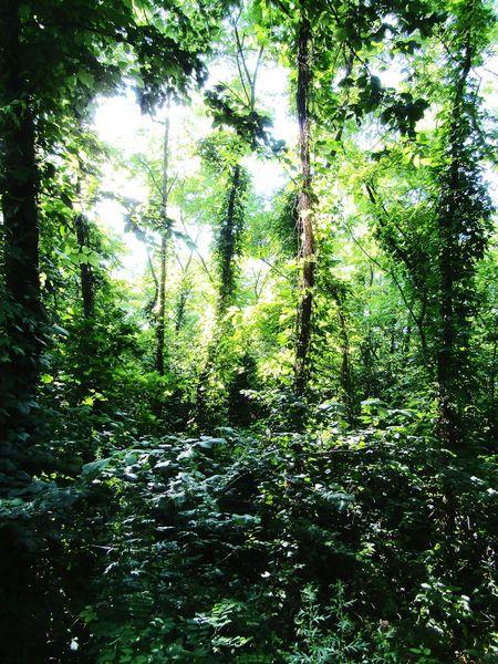 Forest Forestwalk Forestphotography Hellosunshine Mystic Nature Mysterious MysteriousWaysOfNature Naturephotography Naturelovers Plants Trees And Nature EyeEm Nature Lover EyeEm Best Shots EyeEm Best Shots - Nature Eyeemphotography