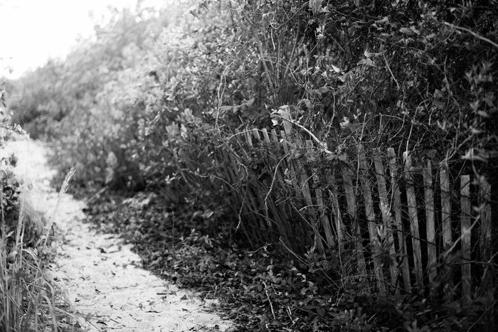 Beach Photography Beach View Black And White Photography No People Outdoors Black And White Beach Fence Brush bushes Bushes At The Beach Virginia Beach Old Timey Pathway Paths Of Life Path In The Woods Path To The Beach Landscape_Collection