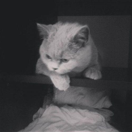 Koteł w szafie 😂👌🐱 Kotek Poszukiwanianarnii