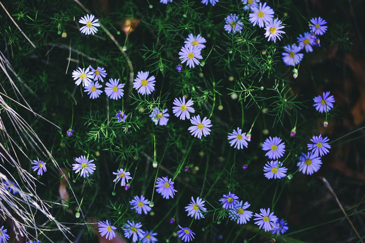 Beauty In Nature Day Flower Flower Head Fragility Freshness Growth Nature No People Outdoors Plant