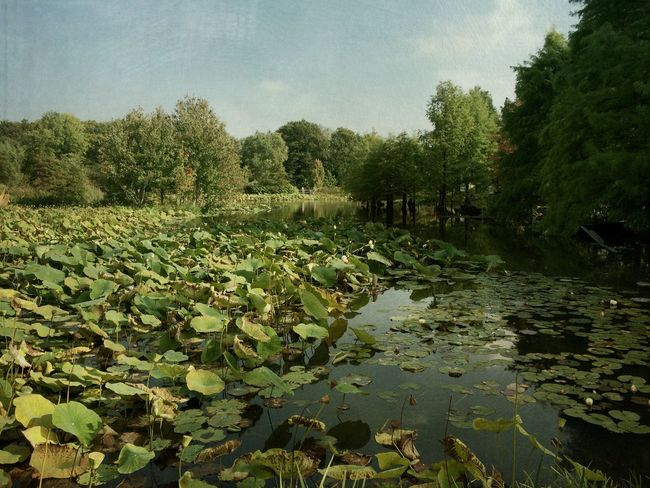 LOTUSLAKE Lotus Lake Nature Chilling