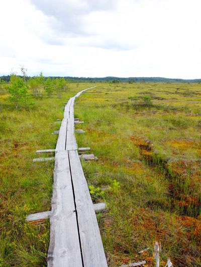 Duckboards at Torronsuo National Park, Finland Aerospace Industry Bog Cloud - Sky Day Duckboard Field Grass Green Color Hiking Landscape Marsh Nature Reserve No People Outdoors Path Path In Nature Pathway Scenics Sky Swamp Swamp Photos Torronsuo Tree Water