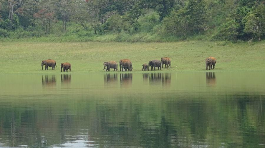 Reflection Animal Themes