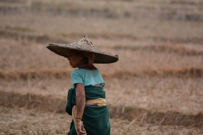 Hat One Woman Only Agriculture Farmer Rural Scene Nature Outdoors