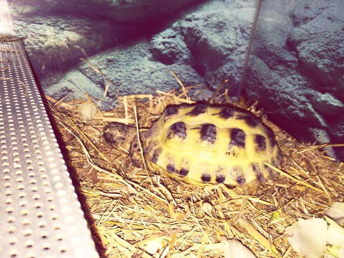 Tortue Turtle Animals