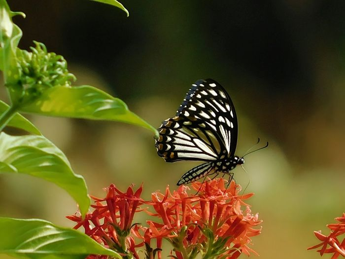 Butterfly - Insect Awsome Weather Leafs Photography Portrait Photography Nikonphotography Perching Red Conformity
