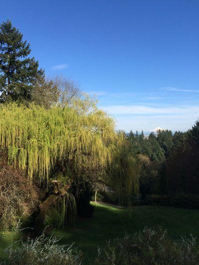 From My Point Of View EyeEm Best Shots Eyeemnaturelover Arboretum Oregon Beautiful Day
