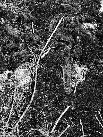 Chaos in nature Abstract Nature Outdoors Textured  Texture Bnw Blackandwhite Black And White Black & White Fine Art Photography Showcase July