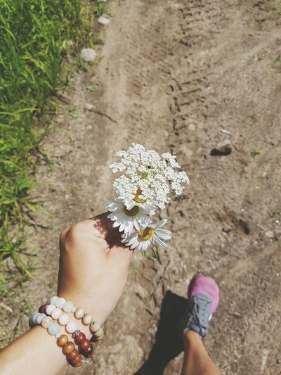 Cottage Life Up North Wild Flowers First Eyeem Photo Ontario Northern Canada Nature