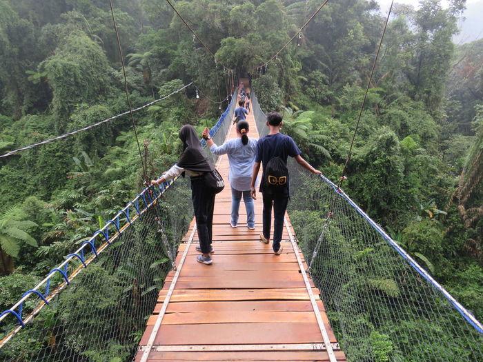 Rear view of men walking on footbridge in forest
