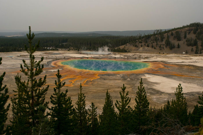 The Grand Prismatic Spring in Yellowstone National Park USA Wyoming Yellowstone Yellowstone National Park Beauty In Nature Color Colour Day Geothermal  Grand Prismatic Spring Hot Spring Landscape Nation Park Nature Outdoors Scenics Sky Tree Water