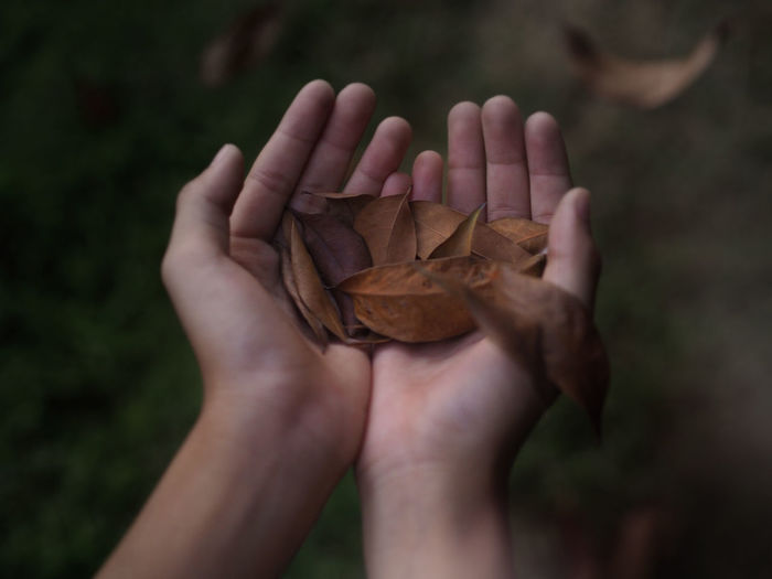 Closeup of a kid hands carrying dry leafs that are dropping from a tree. selected focus.