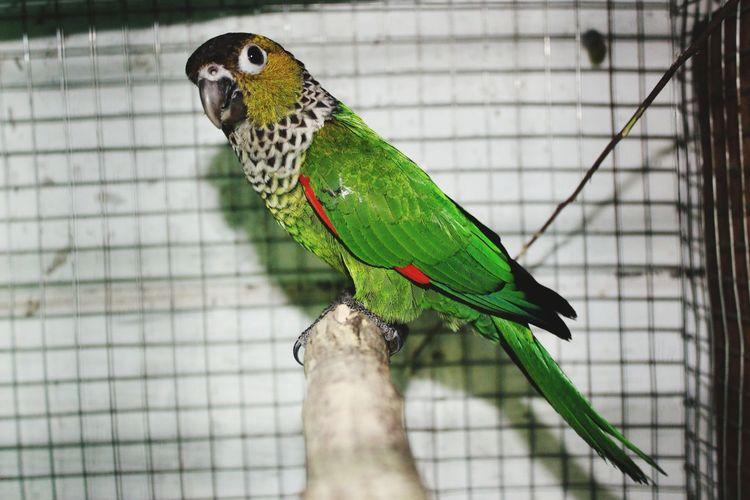 Bird Pets