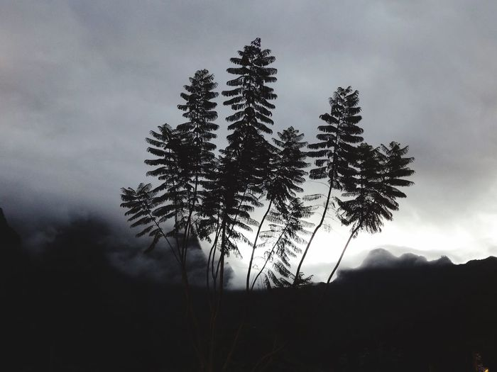 Ferns - La Réunion HUAWEI Photo Award: After Dark La Réunion  Ferms Tree Sky Plant Cloud - Sky Tranquility Beauty In Nature Growth HUAWEI Photo Award: After Dark La Réunion  Ferms Tree Sky Plant Cloud - Sky Tranquility Beauty In Nature Growth HUAWEI Photo Award: After Dark