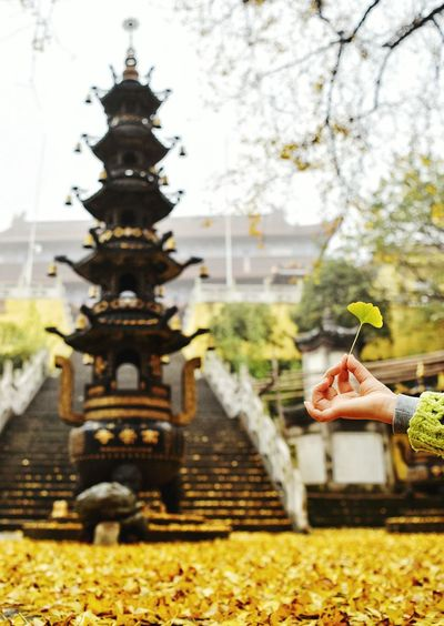 Cropped image of hand holding ginkgo leaf against temple