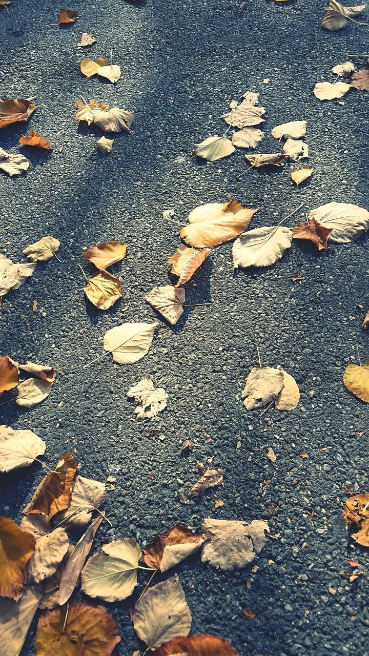 autumn, leaf, change, dry, nature, day, fallen, outdoors, abundance, no people, high angle view, large group of objects, close-up, fragility, beauty in nature, maple