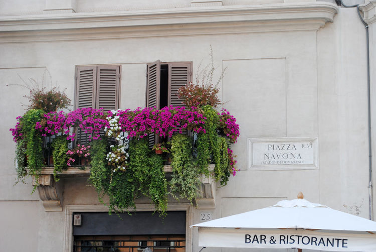 Piazza Navona Architecture Balcony Day Flowers Italia Italianarchitecture Italy No People Phoography Piazza Navona Square Travel