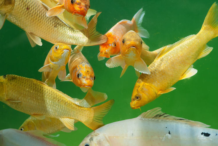 Close-up of group of fish under water