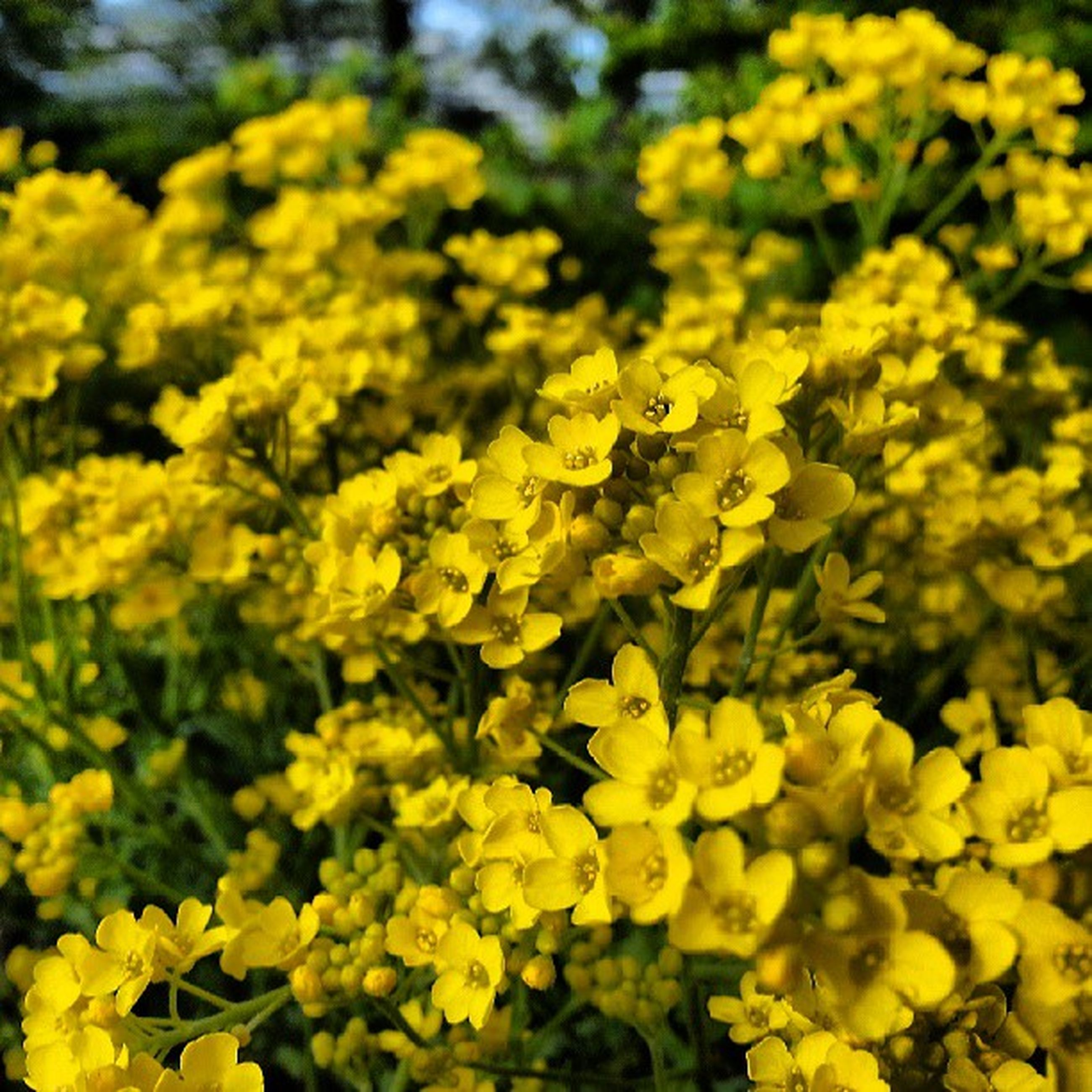 flower, yellow, freshness, petal, fragility, growth, beauty in nature, flower head, nature, blooming, focus on foreground, plant, close-up, selective focus, insect, in bloom, one animal, outdoors, day, no people