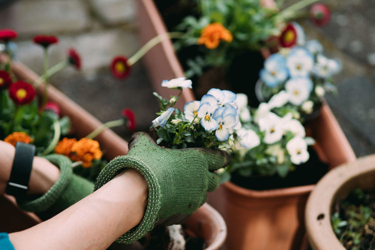Midsection of person holding flower pot on potted plant