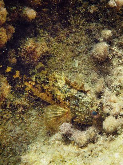 Plemmirio - Pillirina 🐠 Animal Themes Underwater Animals In The Wild One Animal Sea Life UnderSea No People Animal Wildlife Nature Sea Close-up Water Day Outdoors