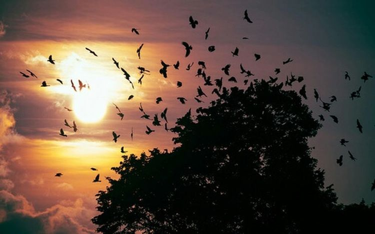 Birds Nature Landscape Frost Sunset Night Fall Photography Clods And Sky Beautiful Trees ..