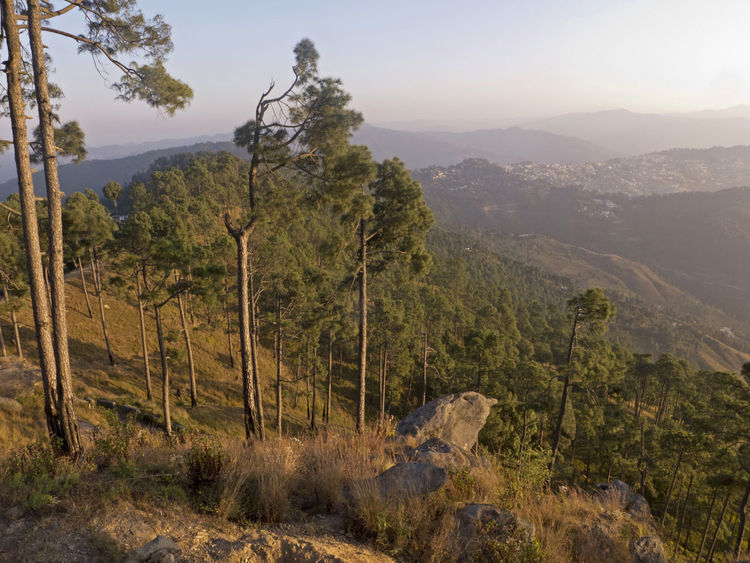 Hike through the Himalayan region Hiking Himalayas India Beauty In Nature Forest Forest Photography Hiking Trail Hill Landscape Mountain Mountain Range Nature Rocks Scenics Stone Tranquil Scene Tranquility Tree Uttarakhand
