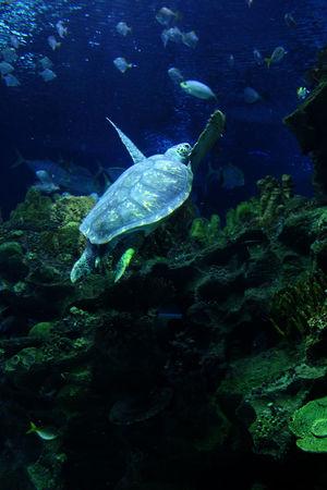 Aim higher Underwater UnderSea Sea Life Animal Wildlife One Animal Swimming Animal Themes Water Nature No People Sea Outdoors Day Aquaria Klcc Blue EyeEmNewHere EyeEm Ready